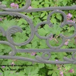 Geraniums and wrought iron