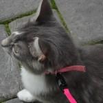 Cat Series # 1, 2009