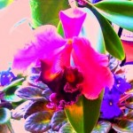 transdimensional orchid