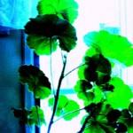 Green Blush