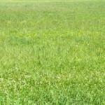 green field 2014