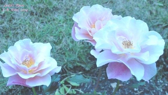 Leila's Roses 3, 2014