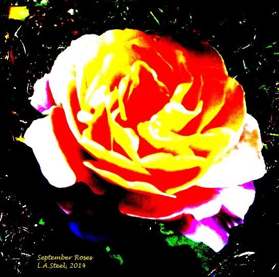 september roses 3