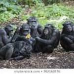republican intel commitee members 2019