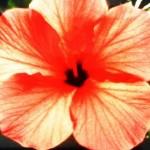 sized flower