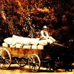 sized wagon