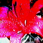 Transdimensional Exploding Red Flower