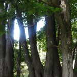 Tree series grove natural 2 signed
