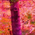 bird house tree