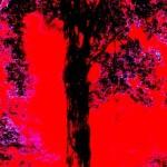 black red tree
