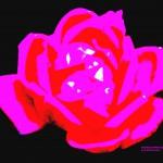 transcending-rose-3-2016