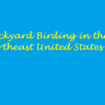backyard birding in the U.S title page