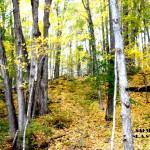 SALMON KILL FOREST 1 2015