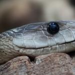 snake-toxic-dangerous-terrarium-38290 (1)